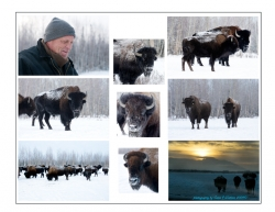 Photo Collage taken by photographer Carol Watkins, Delta Junction,  November 2009.  http://alaskaandreamphotos.com